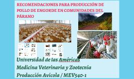 RECOMENDACIONES PARA PRODUCCIÓN DE POLLO DE ENGORDE EN COMUN