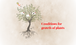 Conditions for growth of plants