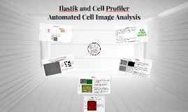Ilastik and Cell Profiler