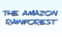 Amazon Rainforest Alt