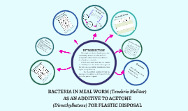 BACTERIA IN MEAL WORM (Tenebrio Molitar) AS AN ADDITIVE TO A