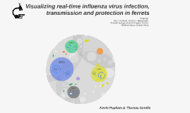 Copy of Visualizing real-time ifluenza virus infection, transmission