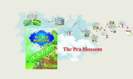 The Pea Blossom Story