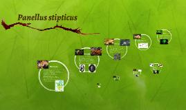Panellus stipticus