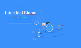 Intertidal Biome