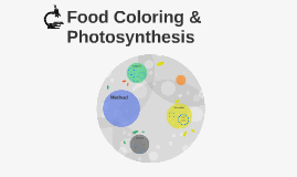 Food Coloring & Photosynthesis