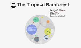 The Tropical Rainforst
