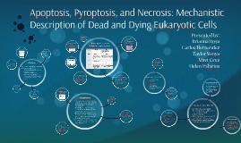 Apoptosis, Pyroptosis, and Necrosis: Mechanistic Description