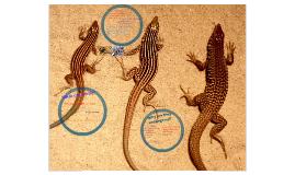 Leaping Lesbian Lizards