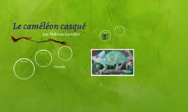 Caméléon casqué
