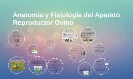 Copy of Anatomía y Fisiología del Aparato Reproductor Ovino