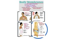 Integumentary:  Membranes & Skin