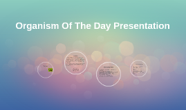 Organism Of The Day Presentation