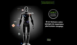 Funciones generales de los organismos pluricelulares