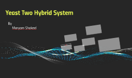 Yeast Two Hybrid System