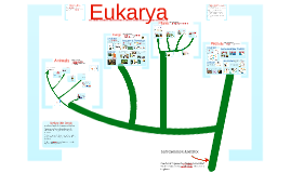 AP Bio-Biodiversity: The Eukarya