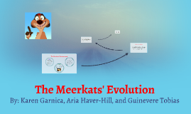 The Meerkats' Evolution