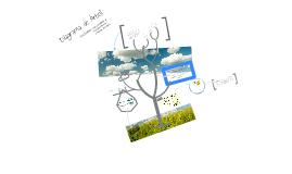 Copy of Diagrama de Arbol