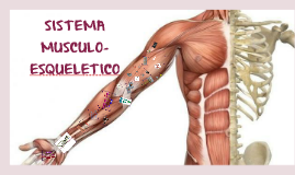 Copy of SISTEMA MUSCULO-ESQUELETICO