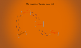 the voyage of the red blood cell