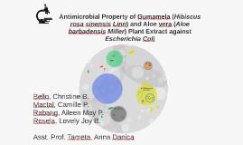 Antimicrobial Property of Gumamela (Hibiscus rosa sinensis L