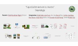 CAPACIDAD DE VUELO EN LOS INSECTOS