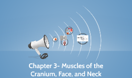 Chapter 3- Muscles of the Cranium, Face, and Neck