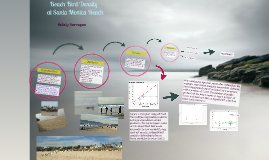 Beach Bird Density