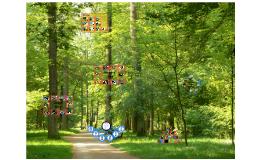 Copy of Wald - Pflanzen und Tiere