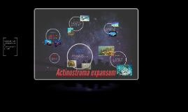 Copy of Actinostroma expansum