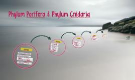 Phylum Porifera & Phylum Cnidaria