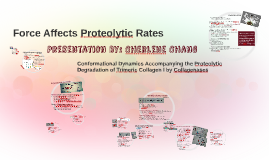 Force Affects Proteolytic Rates