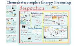 Metabolism 2: Chemoheterotrophic Nutrition