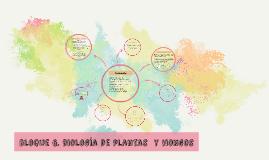 BLOQUE 6. PLANTAS