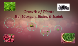 Growth of Plants