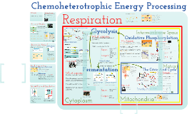 AP Bio- Metabolism 1: Cellular Respiration