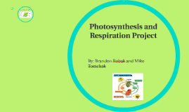 Photosynthesis and Respiration Project