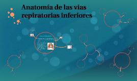 Anatomía de las vias respiratorias inferiores