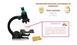 Copy of TEMA: MUESTRA