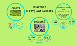 Chapter 6 - Plants and Animals