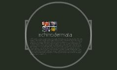 Enchinodermata