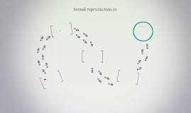 Sexual reproduction in Osteichthyes