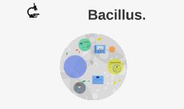Bacillus.