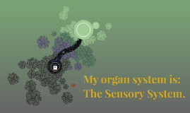 My organ system is: The Sensory System.