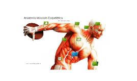 Anatomia Músculo Esquelética 41