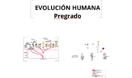 Copy of EVOLUCIÒN HUMANA