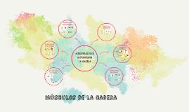FLEXORES Y EXTENSORES DE CADERA
