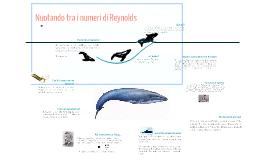 Nuotando tra i numeri di Reynolds