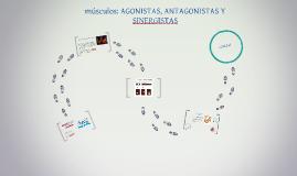MUSCULOS AGONISTAS, ANTAGONISTAS Y SINERGISTAS