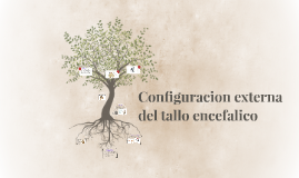 Configuracion externa del tallo encefalico